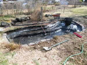 Backyard Pond Remodeling and Renovation