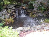 koi ponds,ponds contractor,pond cleaning,pond design,pond companies near me,fish pond builder,gold fish pond,backyard fountain,yard pond,garden pond,water features,rainwater harvesting,stormwater capture,stormwater harversting,water runoff capture,rain water harvesting,rain water collection,rain water management