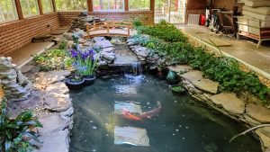 Indoor Pool-to-pond conversion