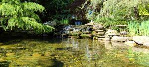 Pond in Potomac, MD