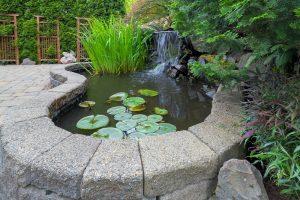 designing and managing backyard ponds