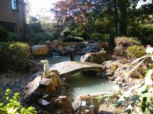 pond conversion
