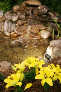 Constucting Backyard Pond with flowers