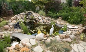 Building, constructing and cleaning backyard ponds