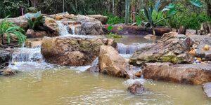 Lush-Garden-Natural-Swimming-Pond