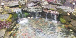 Natural-Fish-Pond