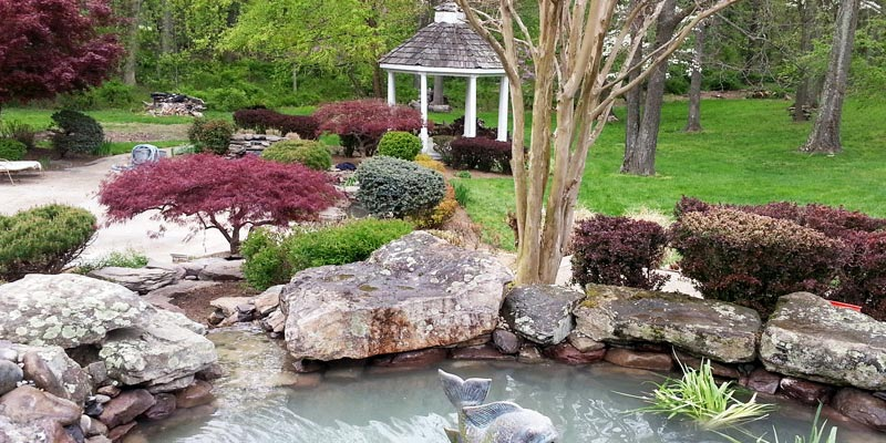 Well-Curated-Garden-Pond